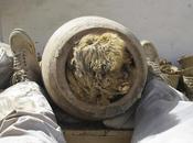 chiens découverts enterrés dans pots Egypte
