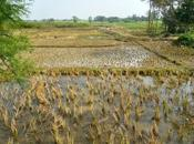 Dans villages dalits Jharkhand