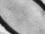 nouveau VIRUS GÉANT, vieux 30.000 ans, réanimé toujours infectieux PNAS CNRS