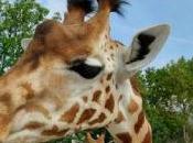 Avril, parc zoologique Paris rouvre portes
