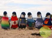 pulls pour pingouins