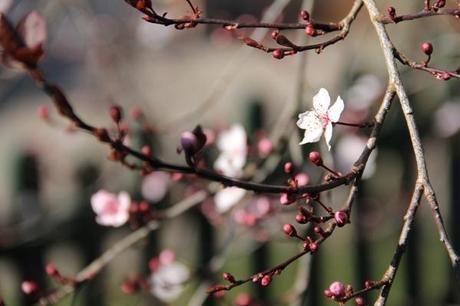 printemps3