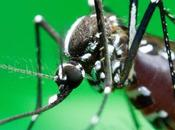 Chikungunya allons-nous vers épidémie majeure Guadeloupe