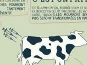 ferme 1000 vaches
