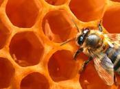 Déclin abeilles ruche high-tech pour comprendre phénomène.