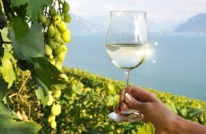 Les régions françaises viticoles se classent parmi les plus populaires du monde