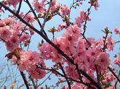 chemin cerisiers