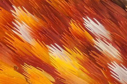Argema mittrei, Linden Gledhill