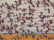 14/04 Doñana, parc naturel, patrimoine l'Humanité, curieusement entouré.