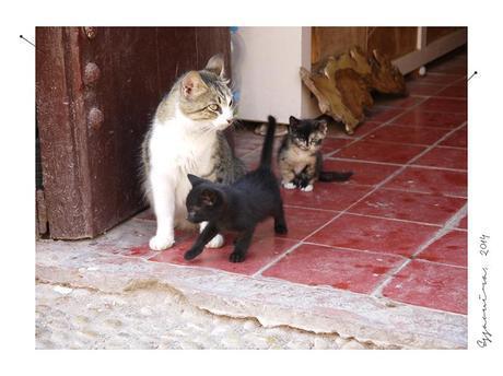 essaouira4 Maroc, pays de couleurs, de parfums et de sourires part 4