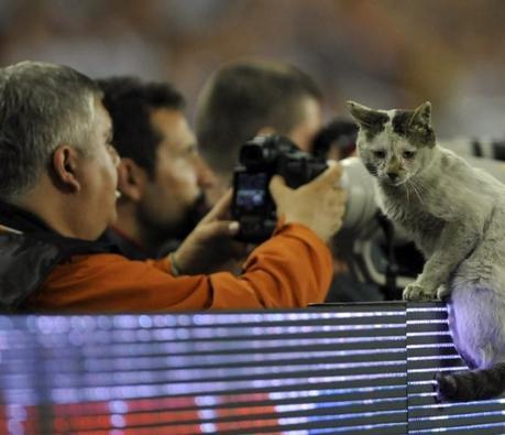Les animaux, fans numéro 1 de sport