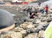 Menace d'explosion d'une baleine morte Canada