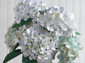 magnifiques hortensias papier)