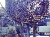 artiste littéralement construit nid...géant