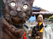 chat retrouve maîtres après tsunami (Japon)