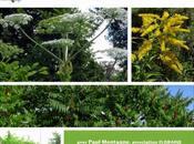 Découvrir plantes invasives