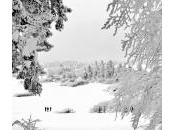 champs feu, Bas-Rhin, France (sous neige)