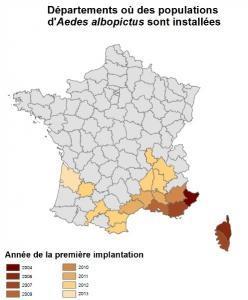 VIRUS ZIKA: La nouvelle menace du moustique tigre, en France aussi – IRD