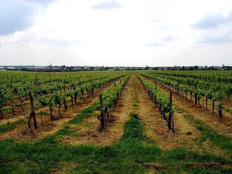 Pollution du fleuve Charente : pesticides