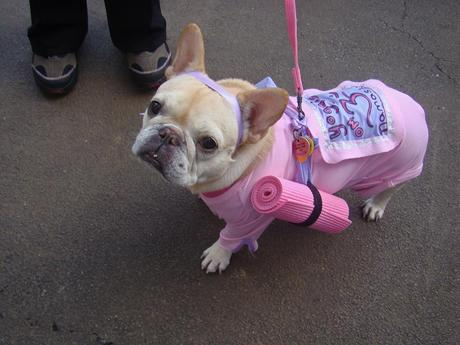 cosplay-dog-animaux-chien-déguisement-mogwaii (2)