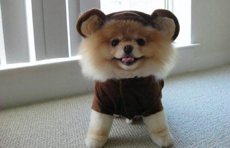 cosplay-dog-animaux-chien-déguisement-mogwaii (6)