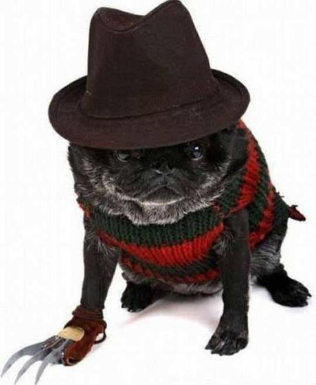 cosplay-dog-animaux-chien-déguisements-mogwaii (31)