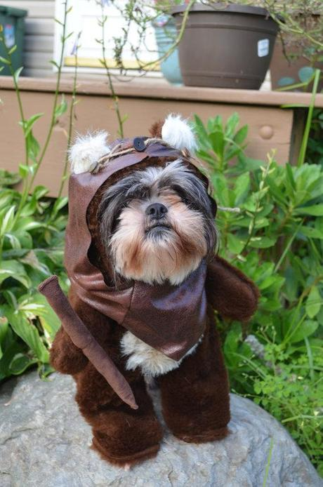cosplay-dog-animaux-chien-déguisements-mogwaii (30)