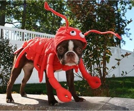 cosplay-dog-animaux-chien-déguisement-mogwaii (50)