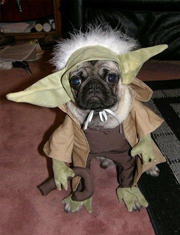 cosplay-dog-animaux-chien-déguisement-mogwaii (42)