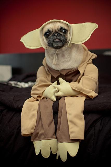 cosplay-dog-animaux-chien-déguisement-mogwaii (29)
