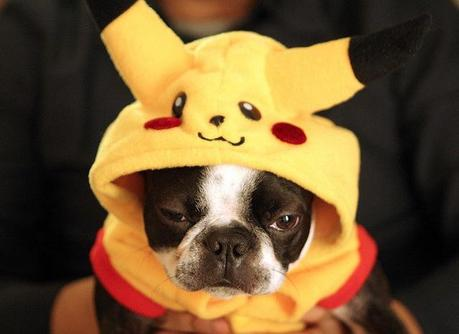 cosplay-dog-animaux-chien-déguisement-mogwaii (22)