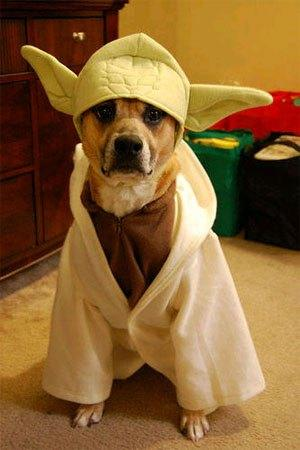 cosplay-dog-animaux-chien-déguisement-mogwaii (41)