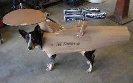 cosplay-dog-animaux-chien-déguisement-mogwaii (1)