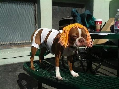 cosplay-dog-animaux-chien-déguisement-mogwaii (13)