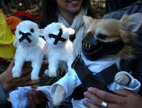 cosplay-dog-animaux-chien-déguisements-mogwaii (32)