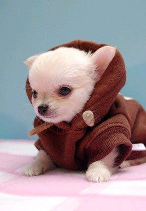 cosplay-dog-animaux-chien-déguisement-mogwaii (46)