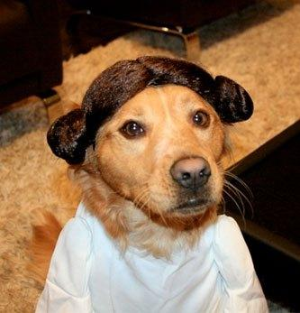 cosplay-dog-animaux-chien-déguisement-mogwaii (44)