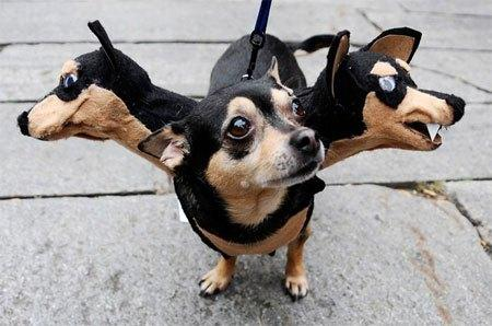cosplay-dog-animaux-chien-déguisement-mogwaii (5)