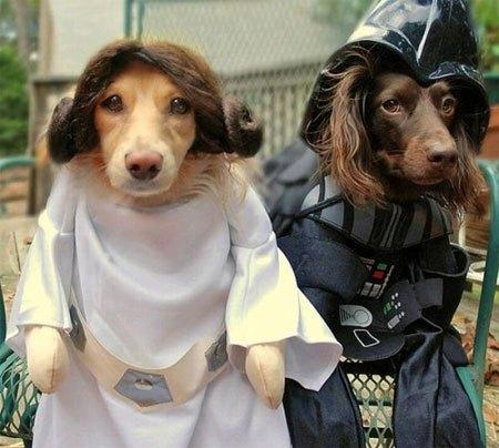 cosplay-dog-animaux-chien-déguisement-mogwaii (31)