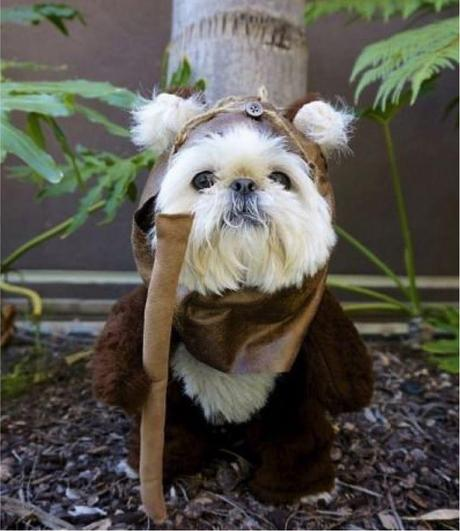 cosplay-dog-animaux-chien-déguisement-mogwaii (7)