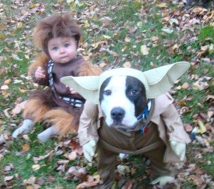 cosplay-dog-animaux-chien-déguisement-mogwaii (48)