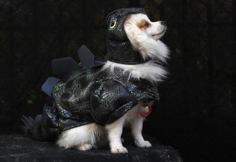 cosplay-dog-animaux-chien-déguisements-mogwaii (25)