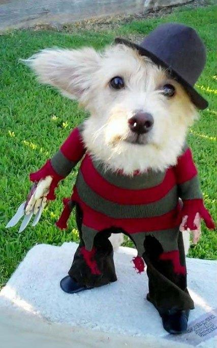 cosplay-dog-animaux-chien-déguisements-mogwaii (34)
