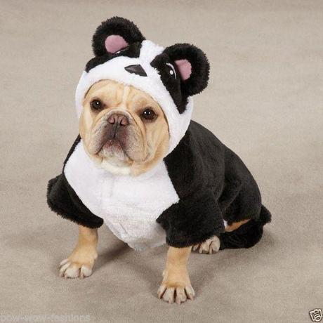 cosplay-dog-animaux-chien-déguisement-mogwaii (4)