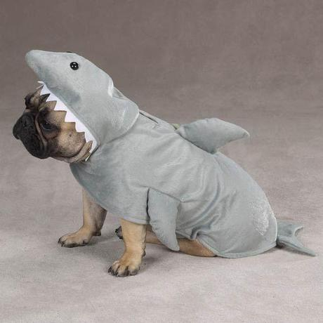 cosplay-dog-animaux-chien-déguisement-mogwaii (23)
