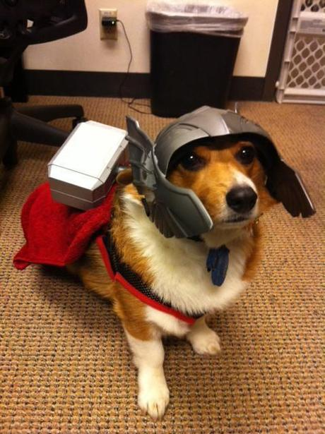 cosplay-dog-animaux-chien-déguisements-mogwaii (18)