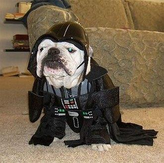 cosplay-dog-animaux-chien-déguisement-mogwaii (32)