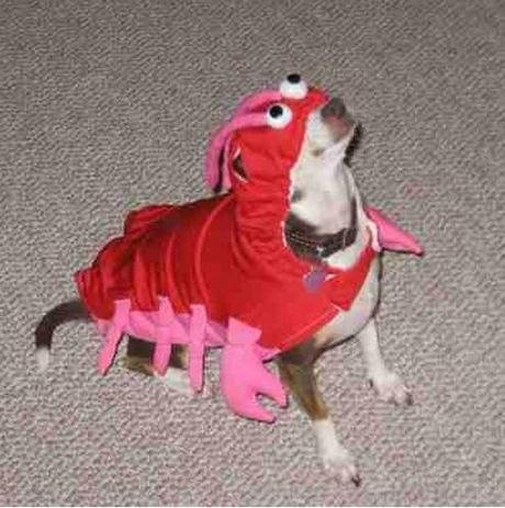 cosplay-dog-animaux-chien-déguisement-mogwaii (54)