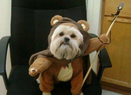 cosplay-dog-animaux-chien-déguisement-mogwaii (36)