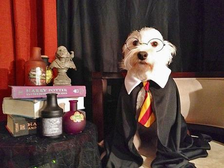 cosplay-dog-animaux-chien-déguisement-mogwaii (20)